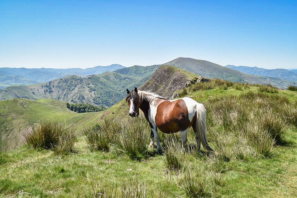 cheval sauvage pays basque