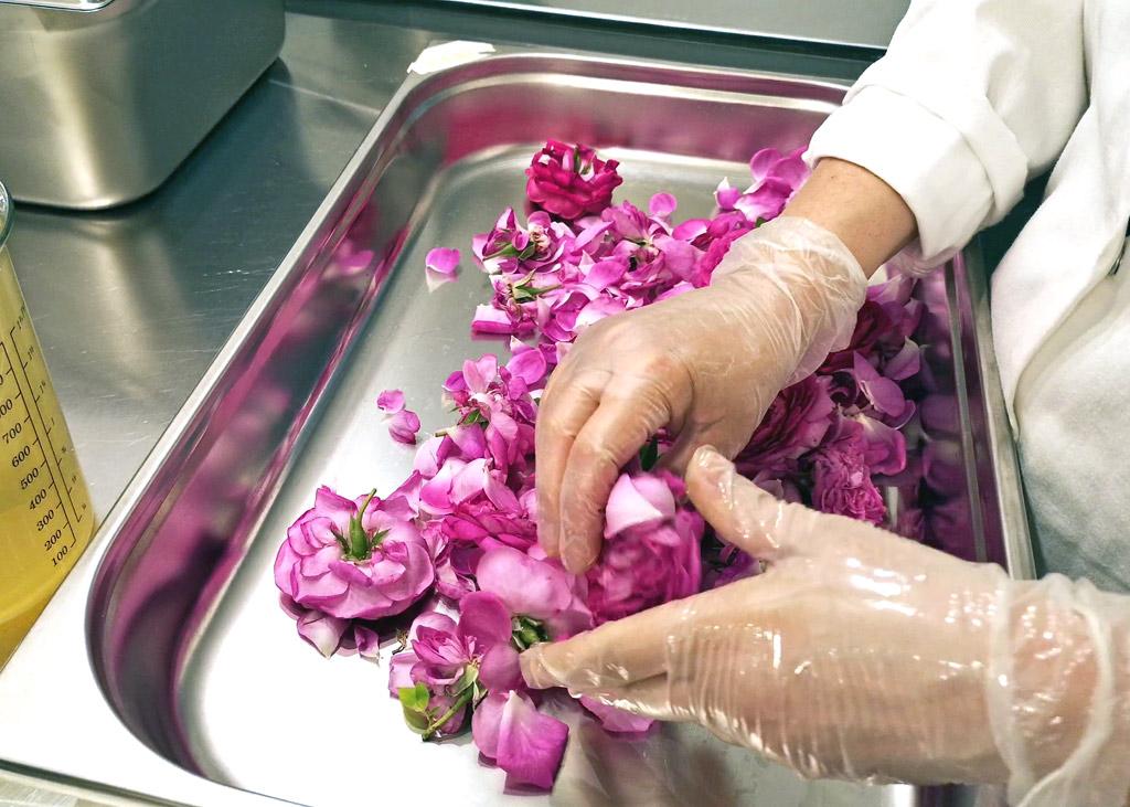 Les pétales de ces fleurs sont mis au repos, puis on les travaille avec des ingr