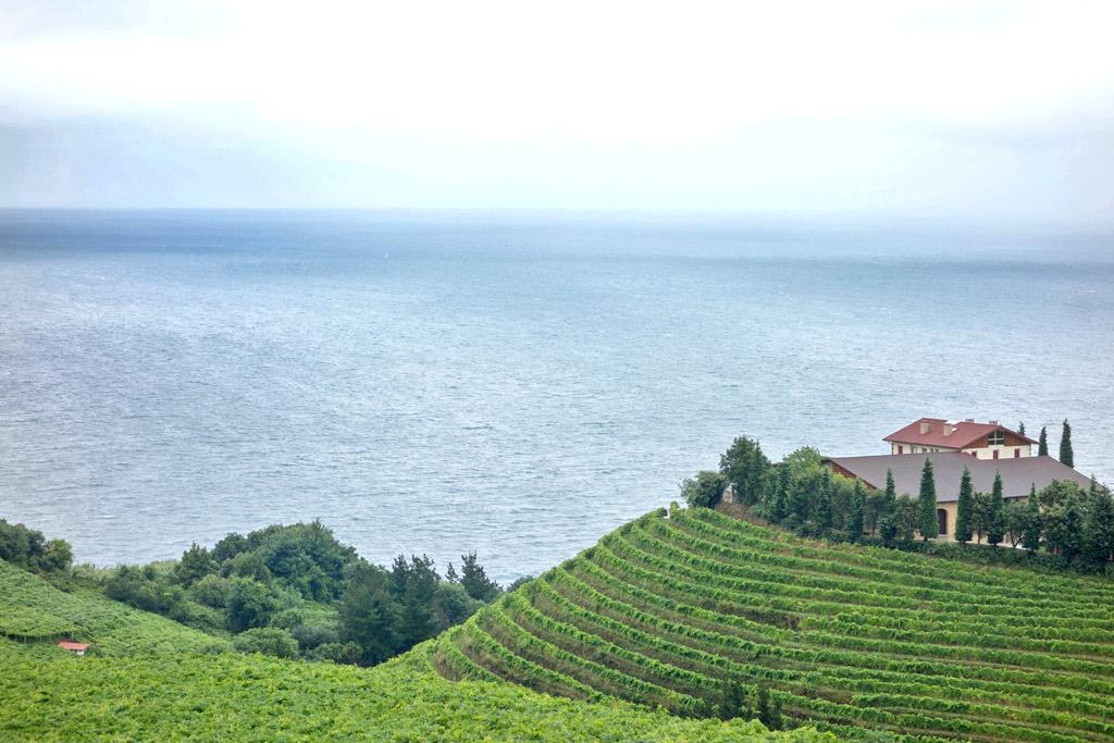 Txakoli vineyards