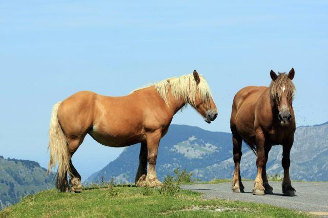 Paysage de Montagne au Pays Basque